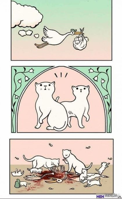 Kotki zjadły bociana przynoszącego małe kotki
