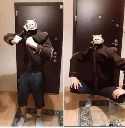 Wojowniczy kot ninja. Śmieszne