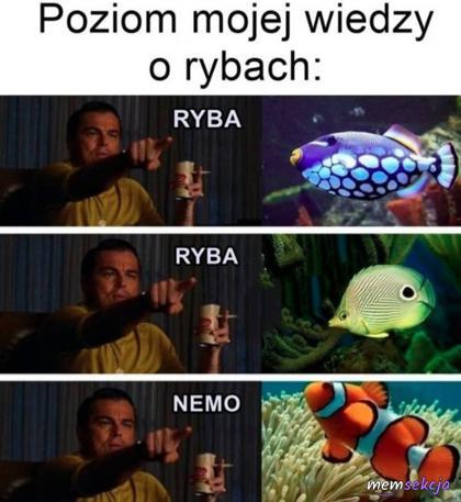 Poziom mojej wiedzy o rybach