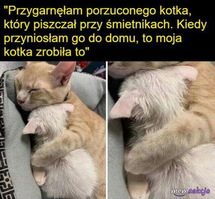 przygarnęła porzuconego kotka