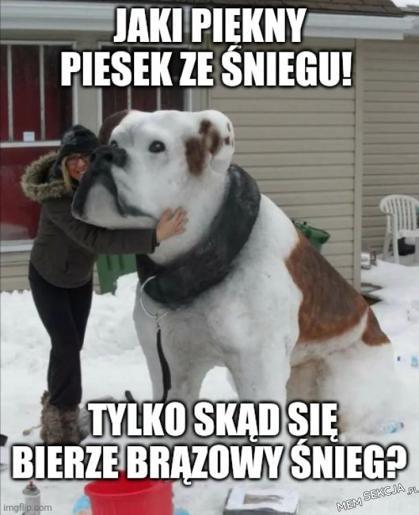 Brązowy śnieg. Memy