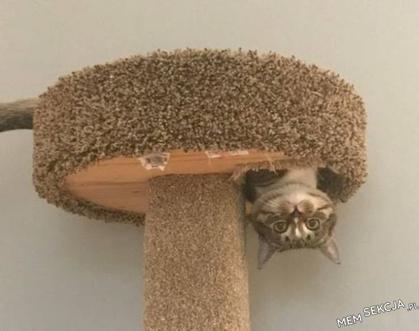 Kot anty-grawitacyjny