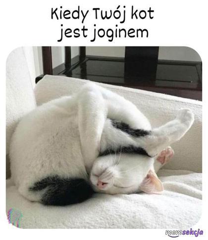Kiedy twój kot jest joginem