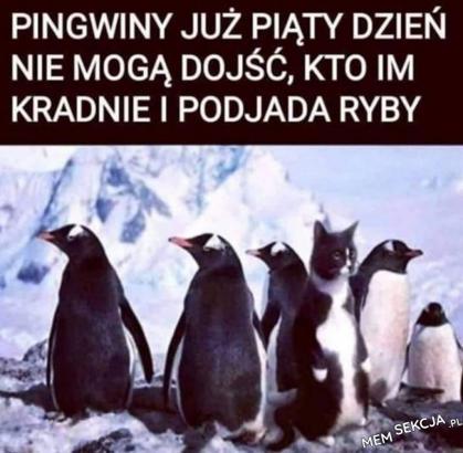 Kto kradnie ryby pingwinom?