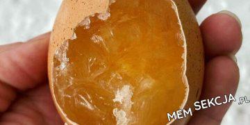 Zamrożone jajko