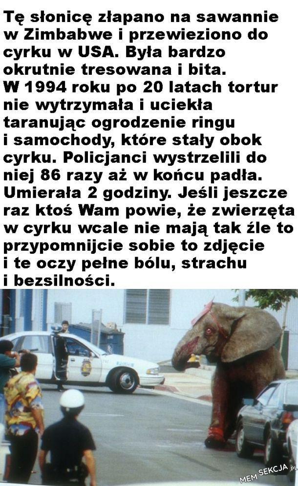 Cyrku. policjanci wystrzelili do