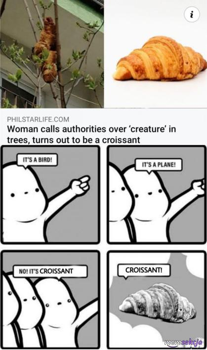 Kobieta wzywa służby do croissanta na drzewie