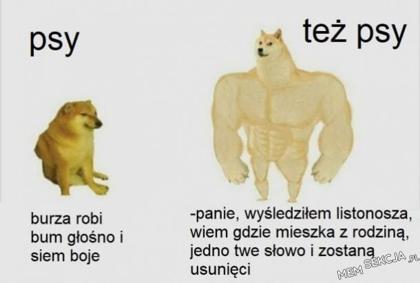Dwie umiejętności psów