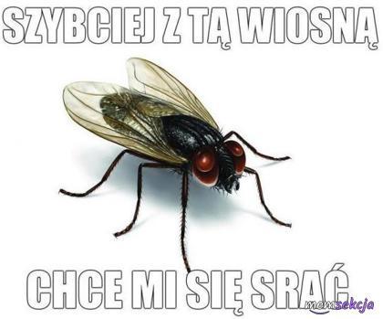 Mucha nie może siędoczekać wiosny