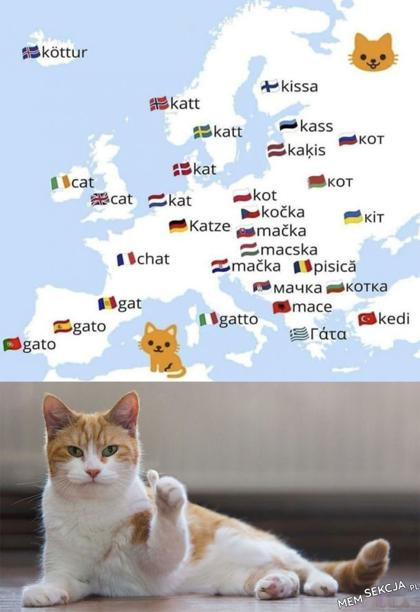 Kotki w różnych językach