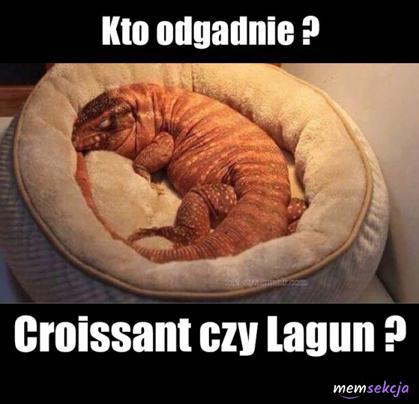 Lagun Czy Croissant?