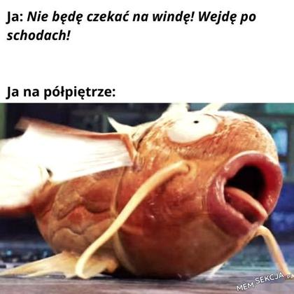 Polpetro