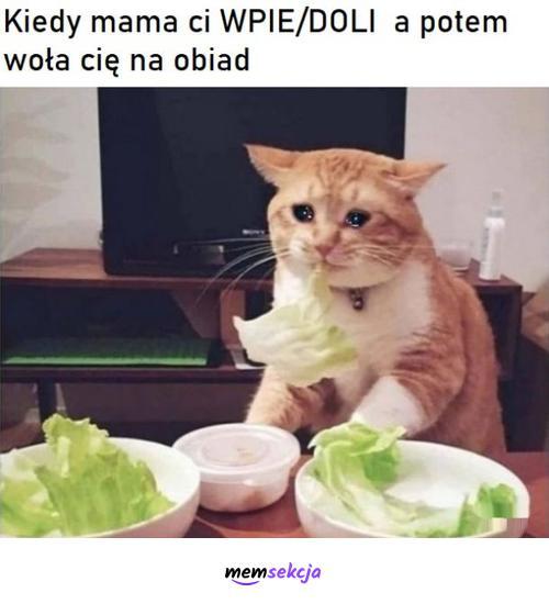 Kiedy mama ci wpie/doli a potem woła na obiad. Memy. Mama. Kotek