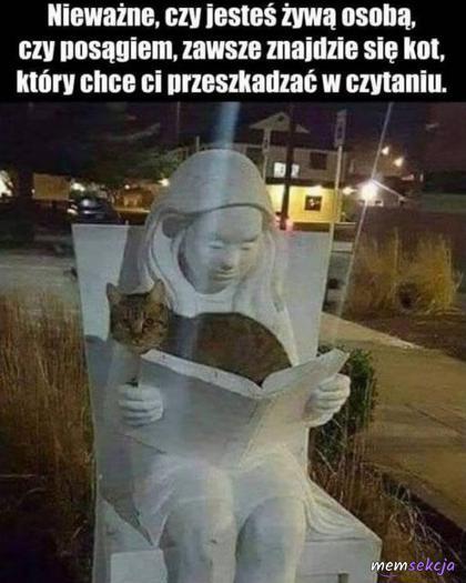 Zawsz znajdzie się kot, który chce ci przeszkadzać w czytaniu