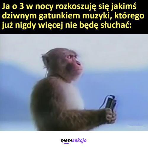 Dziwny gatunek muzyczny słuchany o 3 w nocy. Memy. Małpa. Muzyka