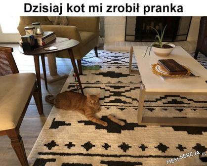 Mój kot to prankster