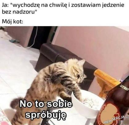 Jedzenie vs mój kot