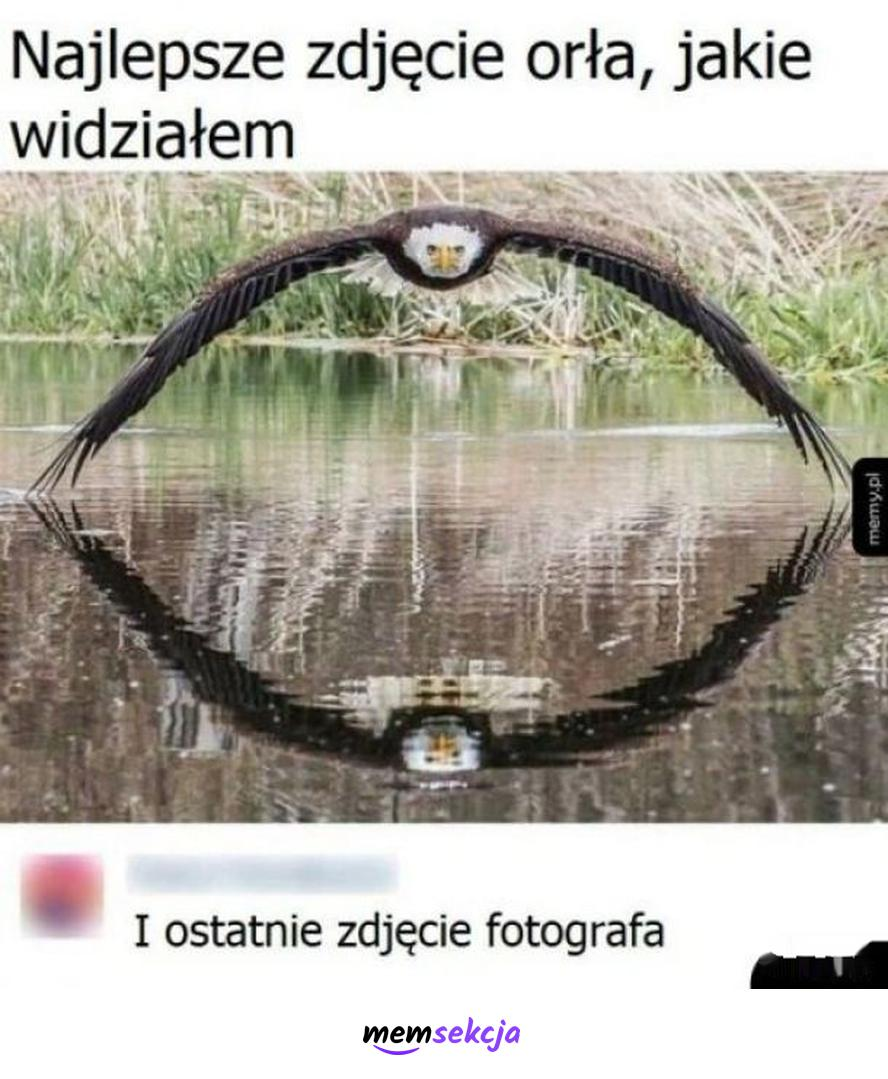 Najlepsze zdjęcie orła, jakie widziałem. Memy. Orzeł