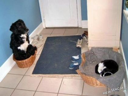 z kotem lepiej nie zadzierać. Śmieszne zwierzęta
