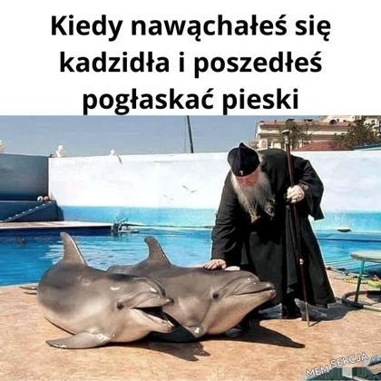 święcenie delfina