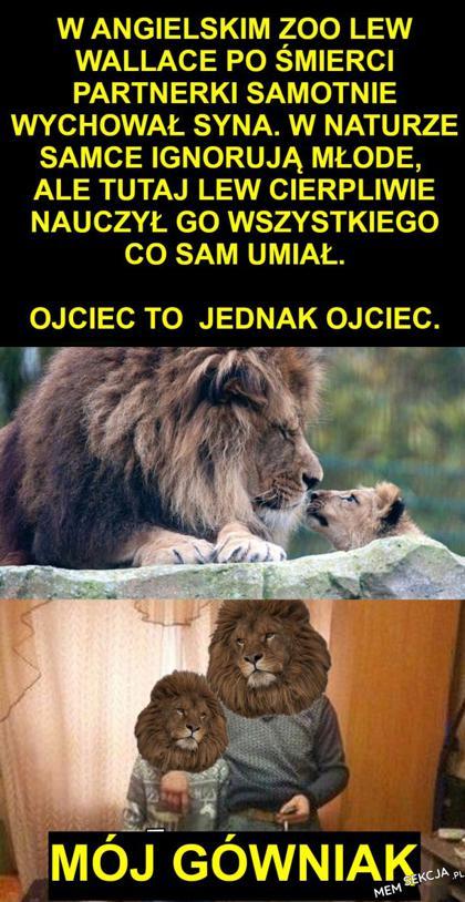 Lew samotnie wychował syna