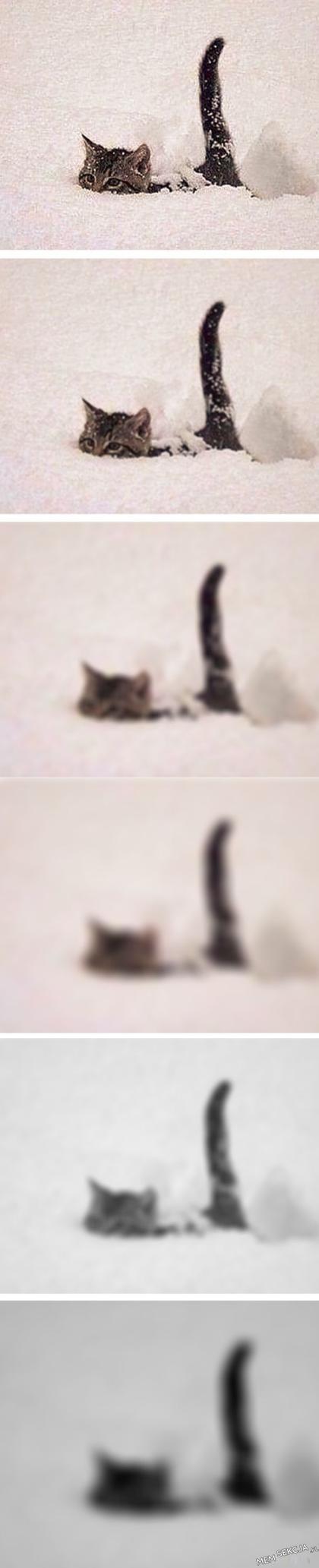 Ten kotek to potwór z Lochness. Śmieszne koty. Beka. Zabawne. Kotek. Potwór  Z  Lochness
