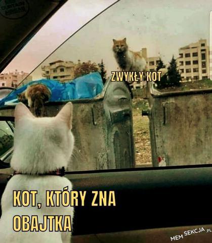 Kot, który zna Obajtka