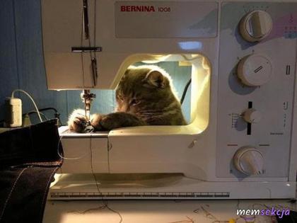 Kotek szyje na maszynie do szycia