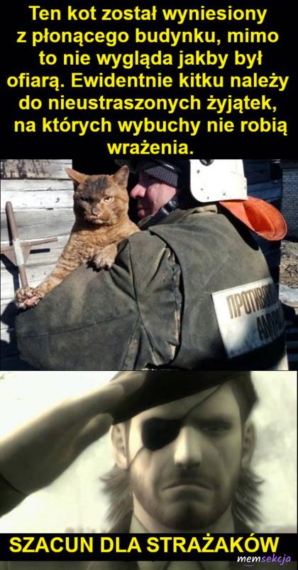 Szacun dla strażaków i pozdrowienia dla nieustraszonego kota