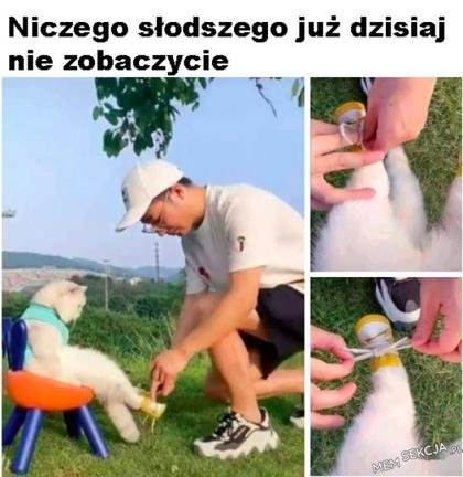 Małe buciki dla kotka