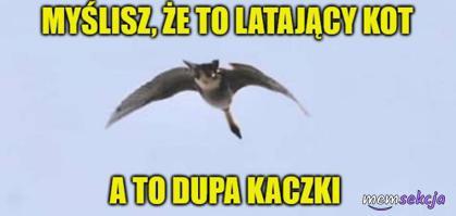 To nie latający kot, to dupa kaczki