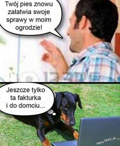 Twój pies znowu załatwia swoje sprawy w moim ogrodzie