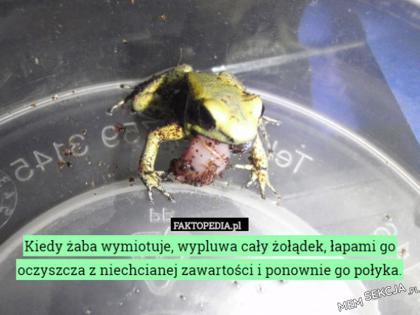 ciekawa żaba