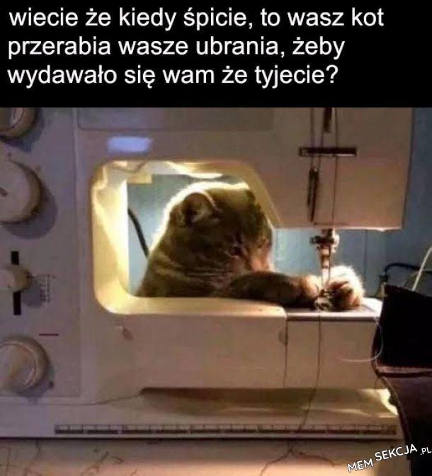 koty to takie małe skurczybyki, a później śpią cały dzień