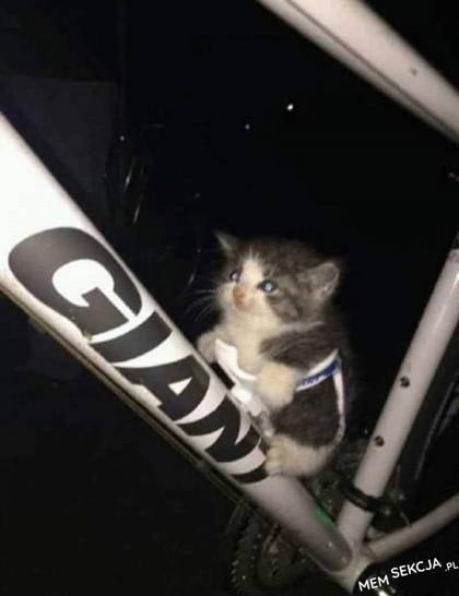 Kotek przydaje się na rowerze