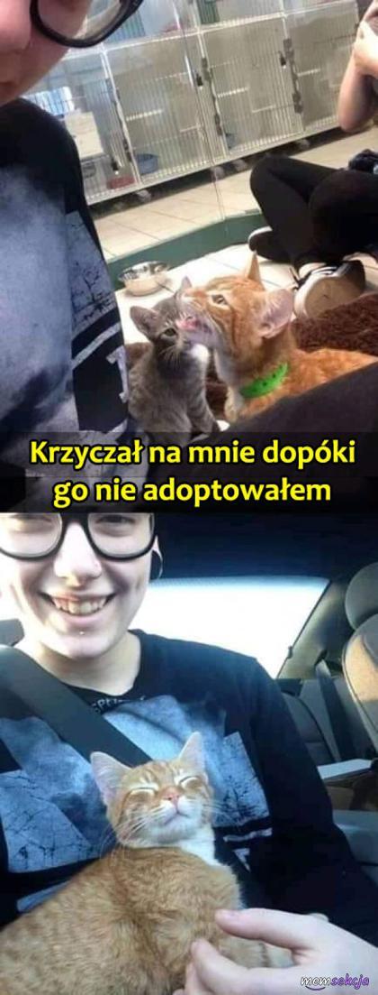 Wymuszona adopocja