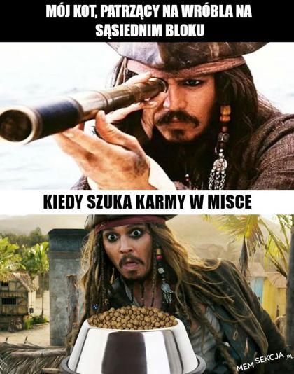 Mój kot szukając karmy w misce. Memy. Jack  Sparrow  Mem. Mój  Kot