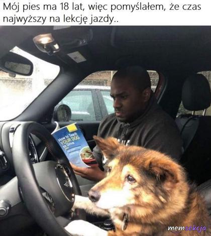 18letni pies uczy się jeździć