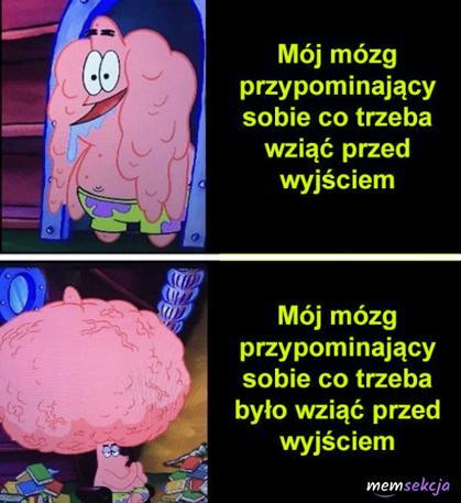 Dwie fazy działania mózgu