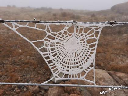 oszroniona pajęczyna = cud natury