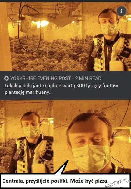 Lokalny policjant znajduje wartą 300 tysięcy funtów plantację marihuany