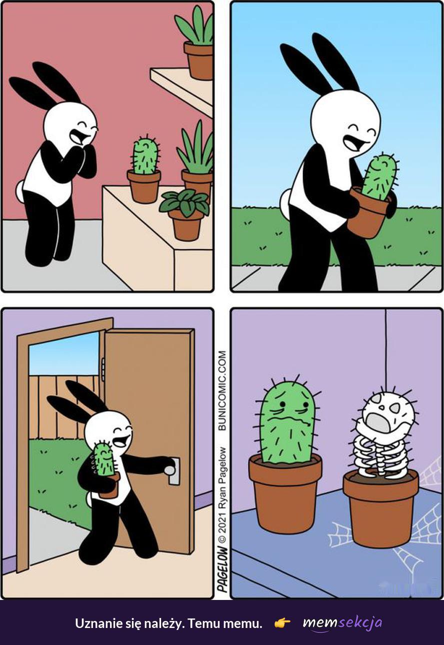 Kaktus vs inne rośliny. Śmieszne. Katus. Rośliny