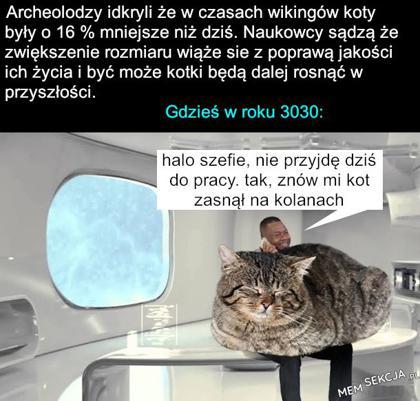potężny kot
