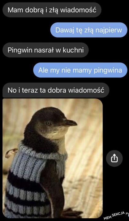 Ale my nie mamy pingwina