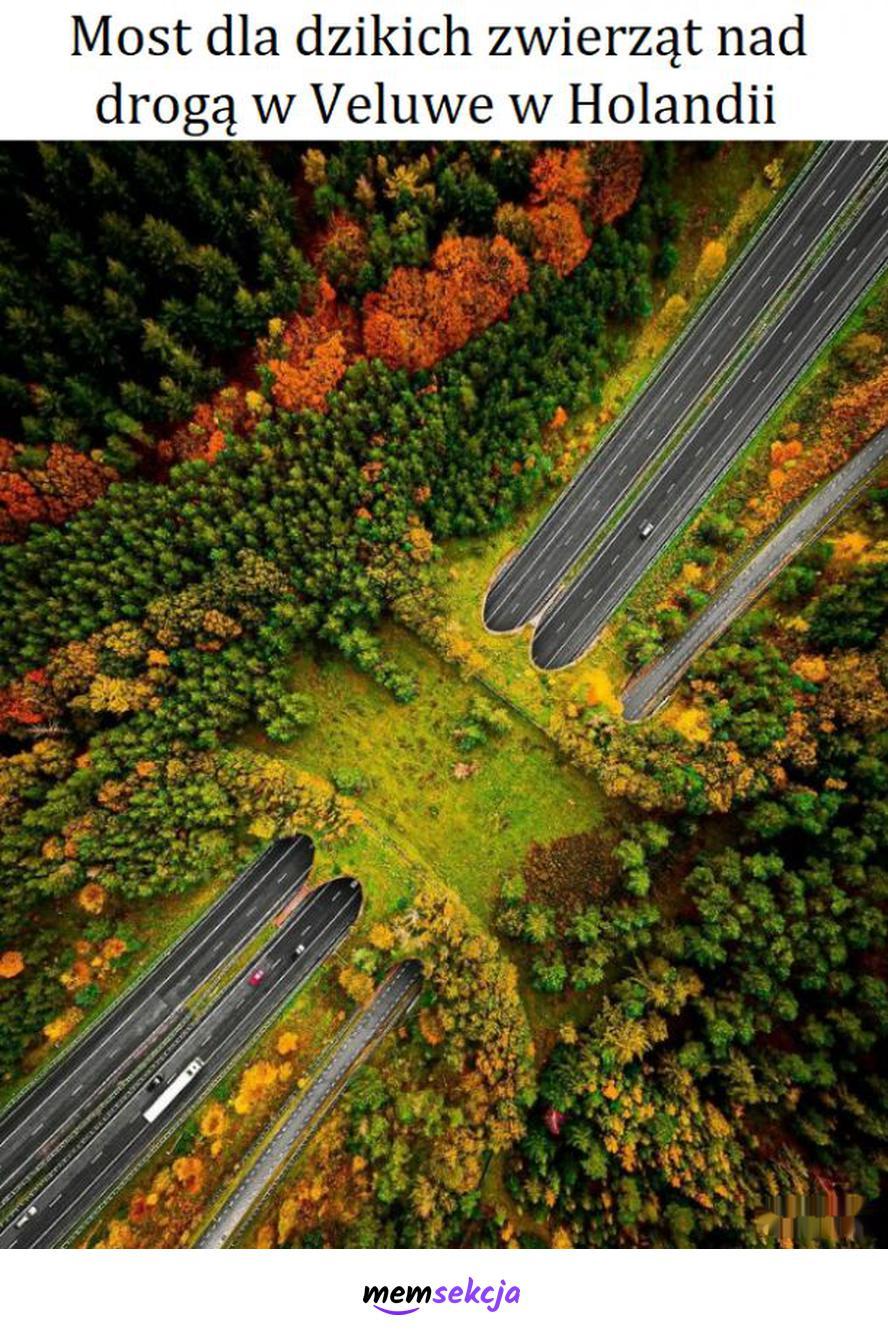 Most dla dzikich zwierząt nad drogą Veluwe w Holandii. Ciekawostki. Ekologia. Przyroda. Holandia