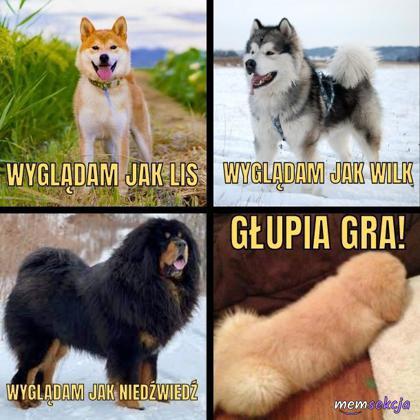 Pieski przypominają rzeczy