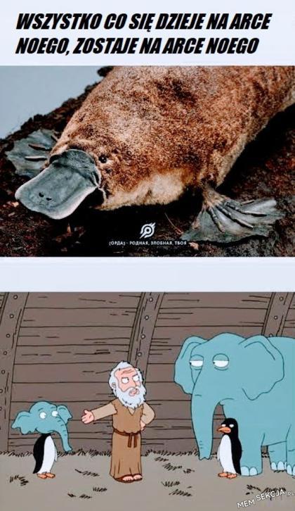 Co się dzieje na arce Noego, zostaje na arce Noego. Śmieszne. Arka  Noego